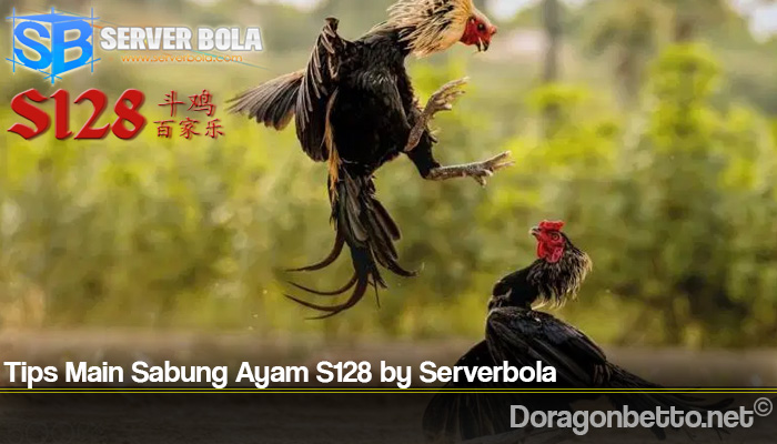 Tips Main Sabung Ayam S128 by Serverbola